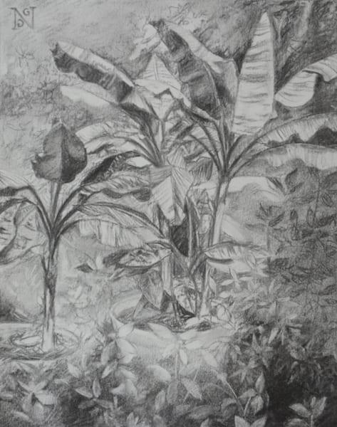 Banana Trees Drawing
