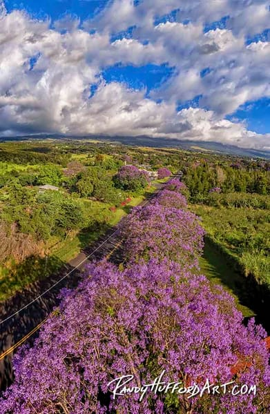 Maui Hawaii Fine Art Photography Aerials