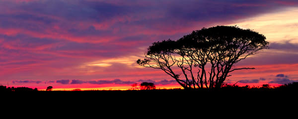 """Serengeti Sunset"" - Nantucket landscape panorama photograph"