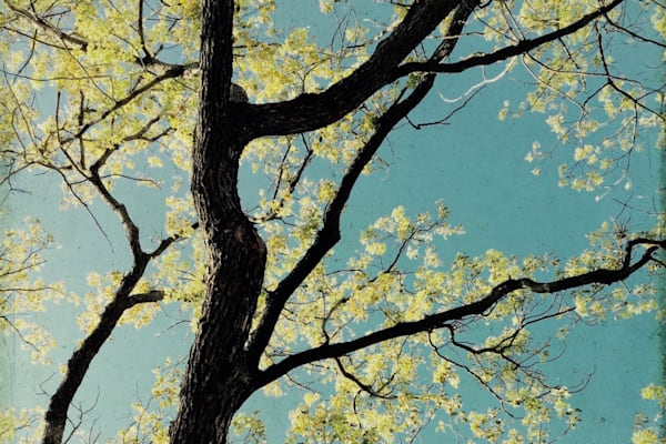40 x 60 ORL-5867-6 Spring Tree II