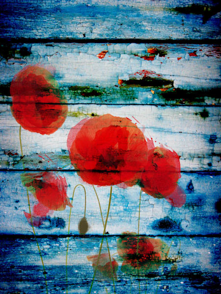 ORL-1093 Poppies on blue II
