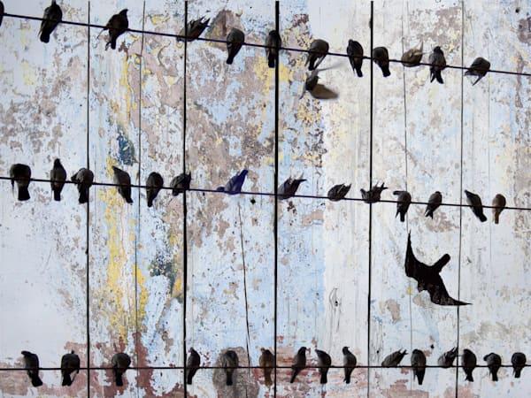 Orl 1123 Spring Birds Ii Art | Irena Orlov Art