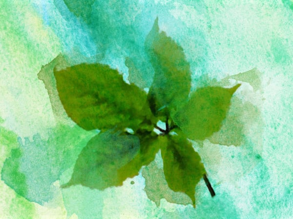 Orl 2006 Summer Leaf Ii Art | Irena Orlov Art