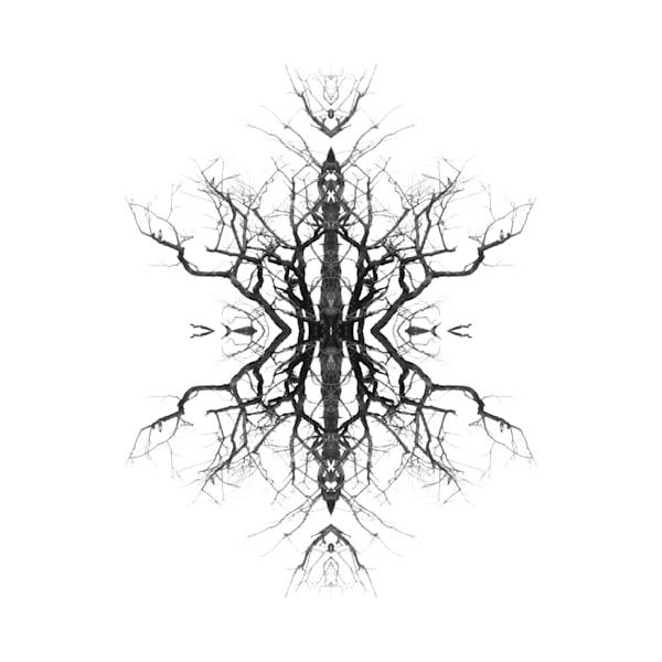Orl 8494 Surreal Tree Art | Irena Orlov Art