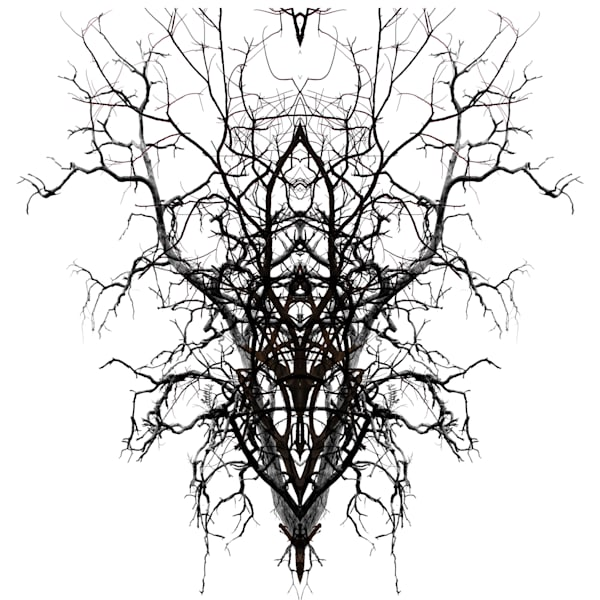 Orl 8495 Self Similarity Art | Irena Orlov Art