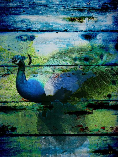 Orl 1096 Peacock I Art | Irena Orlov Art