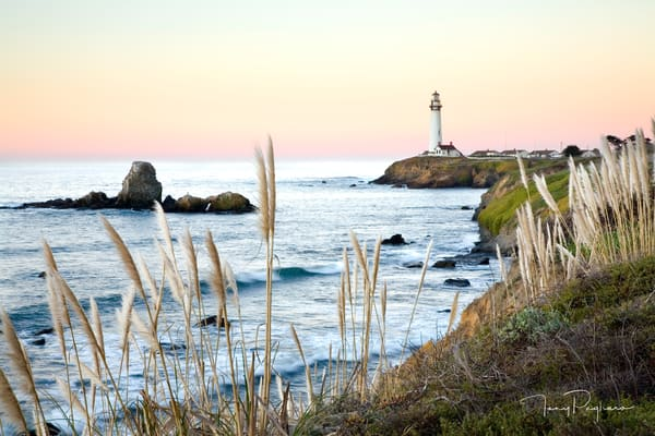 Pampas Grass & Pigeon Point Lighthouse Art | Tony Pagliaro Gallery