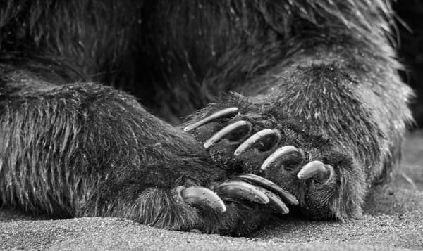 Grizzly Claws, Alaska