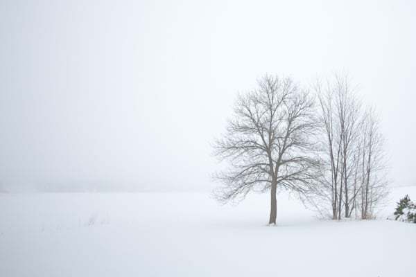 Trees, snow and fog photograph for sale as Fine Art.