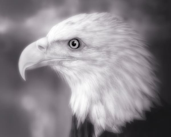 Bald Eagle Predatory Majestic Patriot|Wall Decor fleblanc