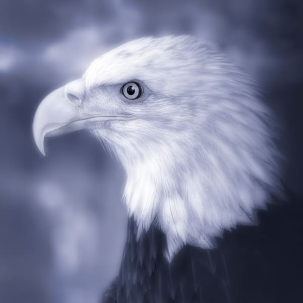 Majestic Endangered Bald Eagle Bird|Wall Decor fleblanc