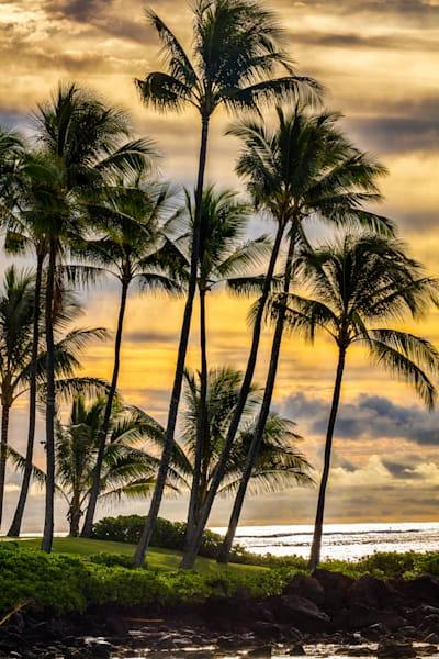 """""""Palms at Sunrise"""""""