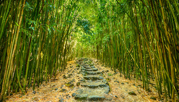"""""""Bamboo Forest"""""""