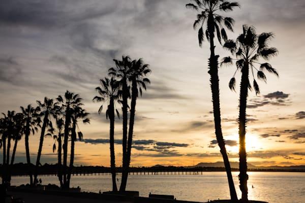 """Palm Tree Promenade"""
