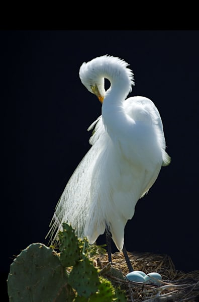 Moonlit Egret Photography Art | John Martell Photography