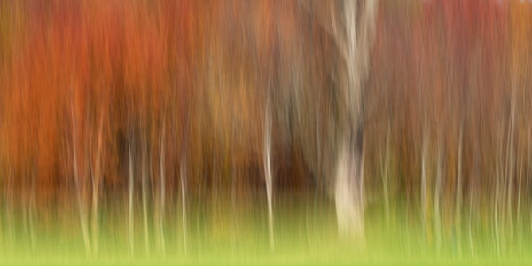 Photograph of Autumn impression for sale as fine art.