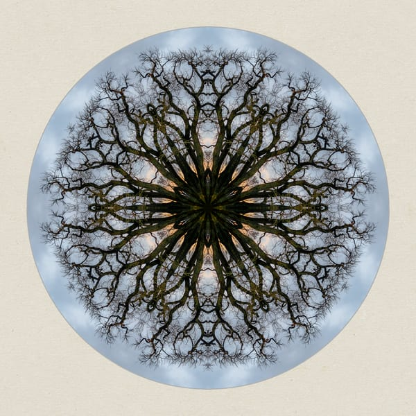 Photographic Nature Mandalas for Sale as Fine Art