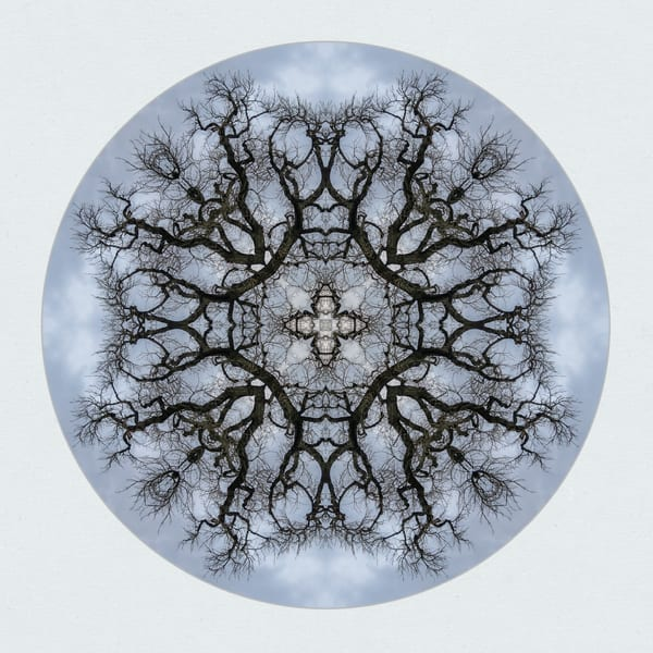 Colorado Cottonwood 2 for sale as fine art photographic mandala.