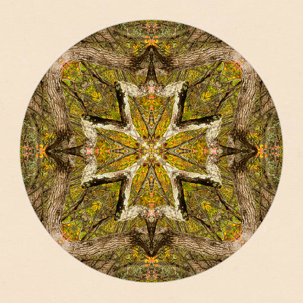 Fall Forest for sale as fine art photographic mandala.