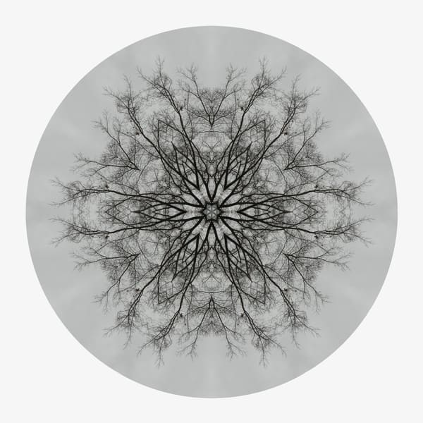 197f538287e Winter Oak for sale as fine art photographic mandala.
