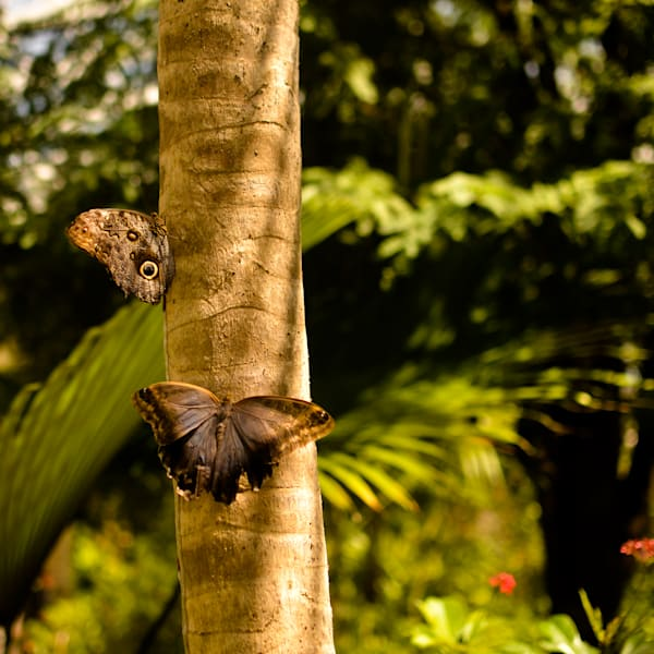 Moths Resting | Travel Photo For Sale