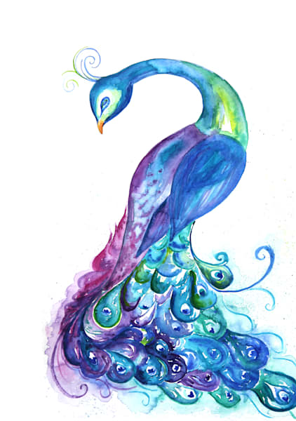 Gorgeous watercolor peacock art by sally barlow
