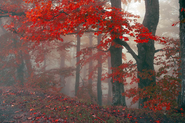 Autumn Mist - DPC_97908835
