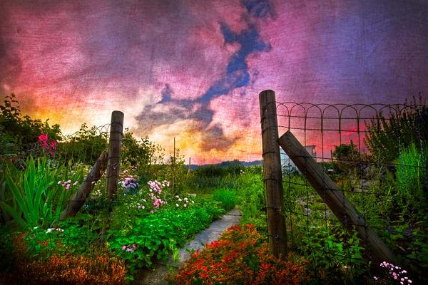 Country Garden - CELLIF133796