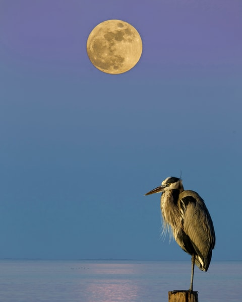 Great Blue Moon Photography Art | John Martell Photography
