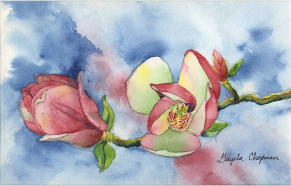 Pink Magnolias art by Gayela's Premiere Watercolor|Main Store