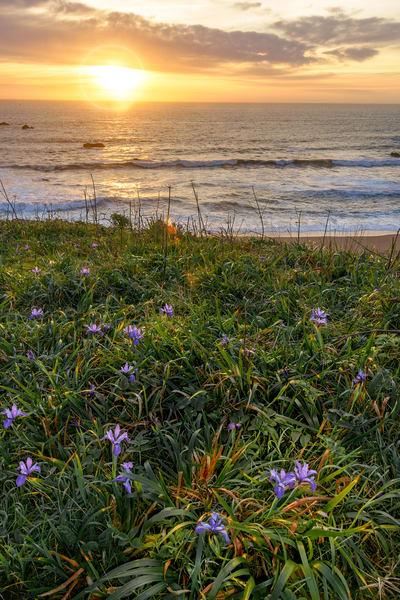 Coastal Iris Sunset