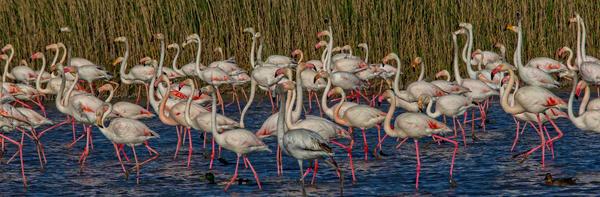 Pink Promenade Photography Art | John Martell Photography