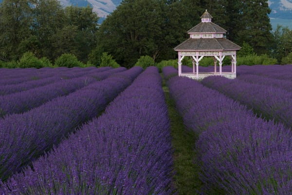 Gazebo In The Lavender Field photograph for sale as art by Mike Jensen.