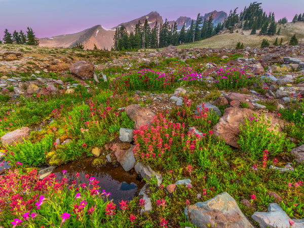 Broken Top Mountain Wildflowers photograph for sale as art by Mike Jensen.