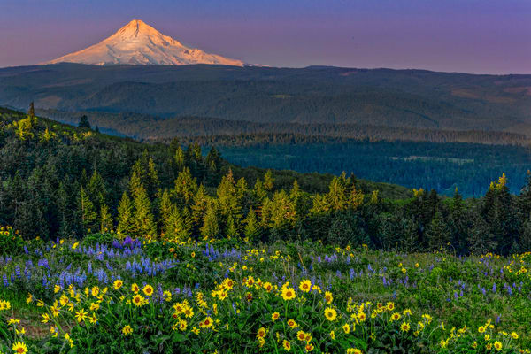 Mount Hood Wildflowers photograph for sale as art by Mike Jensen