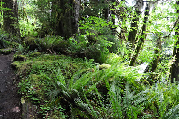 Olympic National Park, Rainforest by Ryn Arnold