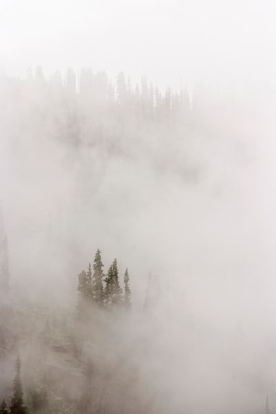 lodge pole pine poking through the clouds