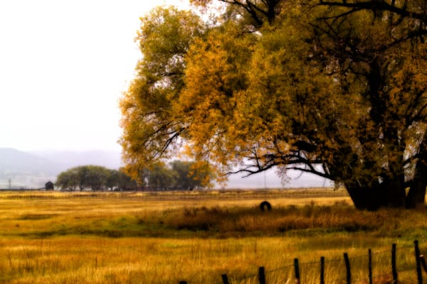 tire swing hanging from old cottonwood trees with a farm in the distance