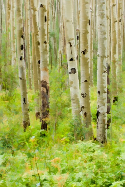 aspen trees with a heart carved into it