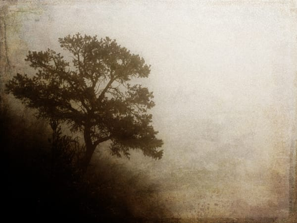 pine tree lost in the fog on the side of a hill