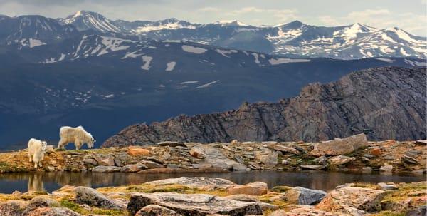 two mountain goats along a high alpine lake