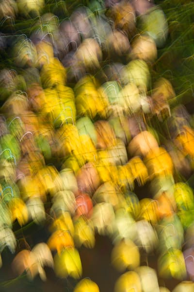 motion blur of colorful aspen leaves