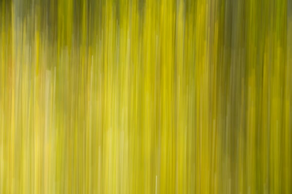motion blur of yellow leaves