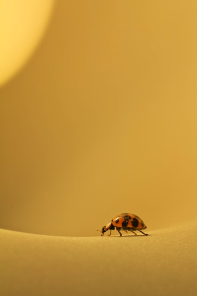 Ladybug in the Lamp