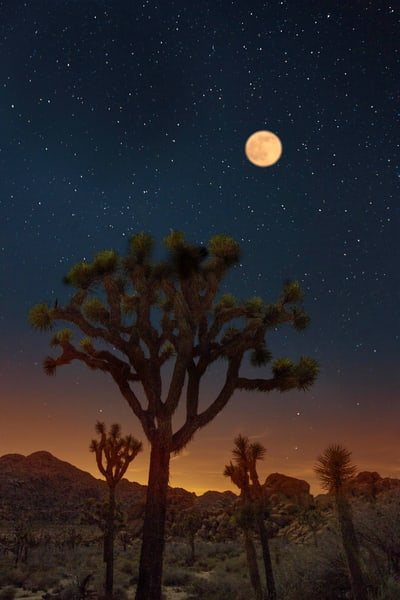Full Moon Over Joshua Tree photograph for sale as art by Mike Jensen