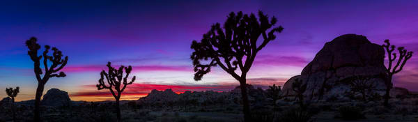 Purple Dusk At Joshua Tree photograph for sale as art by Mike Jensen