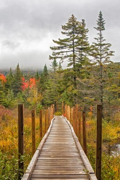 White Mountains, Zealand Trail autumn