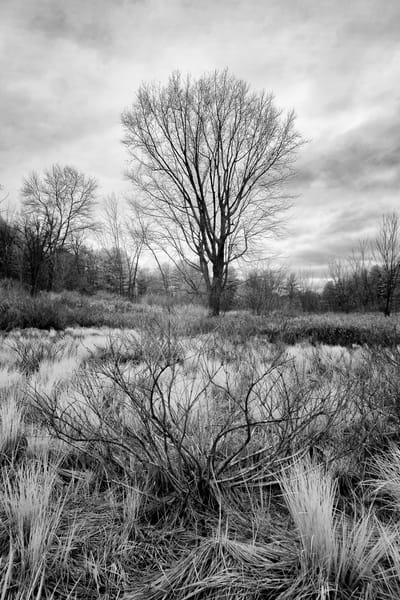 Henniker, NH late fall black and white trees and fields