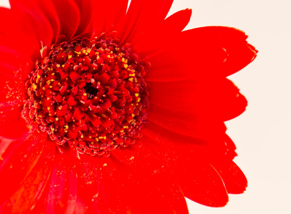 Flower in Red
