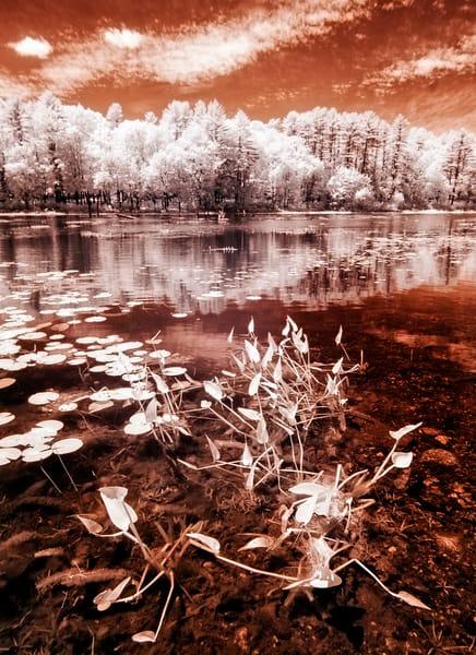 Hopkinton NH Infrared at Stumpfield Marsh